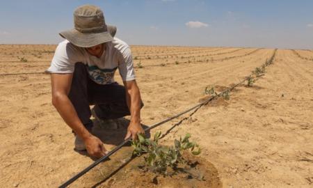Luchando contra el desierto