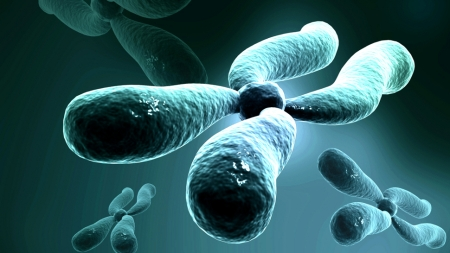 Cromosoma artificial de la levadura 3